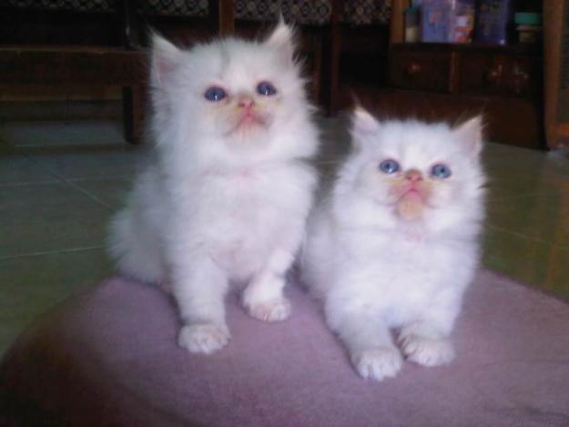 Jual Makanan Kucing Kiloan Bandung Common Blog 022